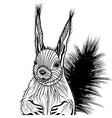 Squirrel head animal for t-shi vector image