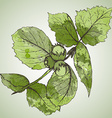 HAnd drawn of hazelnut branch and leaves vector image