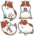 Hamster vector image