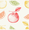 vintage grapefruit background in pastel colors vector image