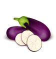 Eggplant aubergine isolated vector image vector image