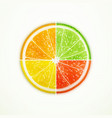 fruit slice vector image