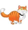 Orange fat cat vector image