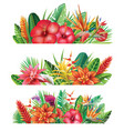 banner from tropical plants vector image vector image