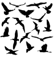 Collection of Bird Silhouettes vector image
