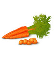 Fresh carrot isolated vector image vector image