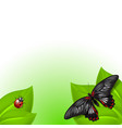 summer background with butterfly and ladybird vector image