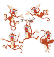Cute Monkeys for you Design vector image