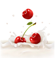 Red cherries fruits falling into the milky splash vector image vector image