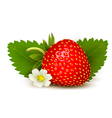 Ripe sweet strawberry and flower with leaves vector image