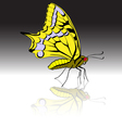 beautiful tropical butterfly vector image