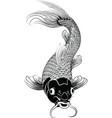 kohaku koi carp fish illustration vector image