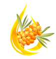 buckthorn oil vector image vector image
