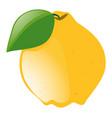 fresh lemon with green leaf vector image