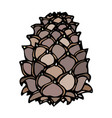 pinecone pine lump isolated on a white background vector image