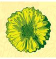 Yellow gerbera vector image