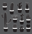 Cactus and Desert Plants Collection vector image