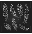 Feathers drawn with chalk on a blackboard vector image
