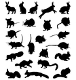 rodents vector image