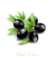 background with black olives vector image