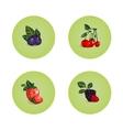 Blackberry Cherry Strawberry Bilberry Icons vector image