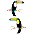 Toucans vector image