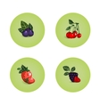 Blackberry Cherry Strawberry Bilberry Icons vector image