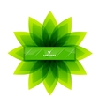Green leaves nature design vector image