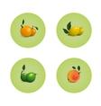 Orange Grapefruit Lime Lemon Citrus Fruits Set vector image vector image