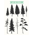 Hand drawn silhouette pine and fir trees vector image
