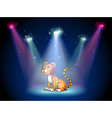 A tiger sitting on the stage with spotlights vector image vector image