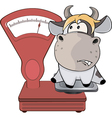 A small cow and weighing scale Cartoon vector image vector image