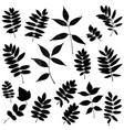 set of leaves silhouettes vector image