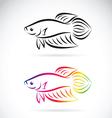 Fighting fish vector image