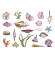 hand drawn seashells collection colorful vector image
