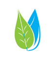 leaf and water drop vector image