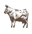 Cow isolated on a white backgrounds vector image