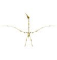 Pterodactyl skeleton vector image
