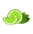 Lime and mint on white background vector image