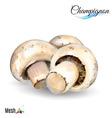 Watercolor champignon vector image