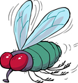 green fly vector image