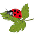 Ladybird sitting on the green leaf vector image