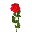 Red rose isolated on a white background vector image