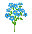 forget-me-nots isolated on white background vector image