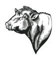 head of bull of dangus breed drawn in vintage vector image