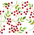 pattern with berries vector image vector image