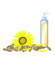 Sunflower Oil and Yellow Sunflower with Seed vector image