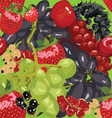 Seamless bright background with berries vector image