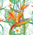 Seamless pattern with Strelitzia vector image vector image