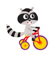 cute little raccoon character riding bicycle vector image